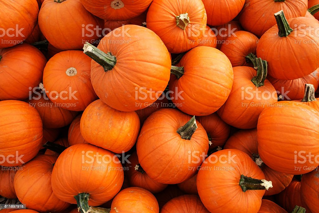 Fall Pumpkin Patch Wallpaper Royalty Free Pumpkin Pictures Images And Stock Photos