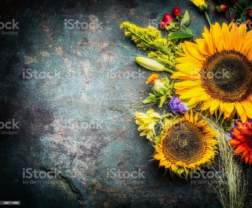 Fall Sunflower Wallpaper Sunflower Background Pictures Images And Stock Photos