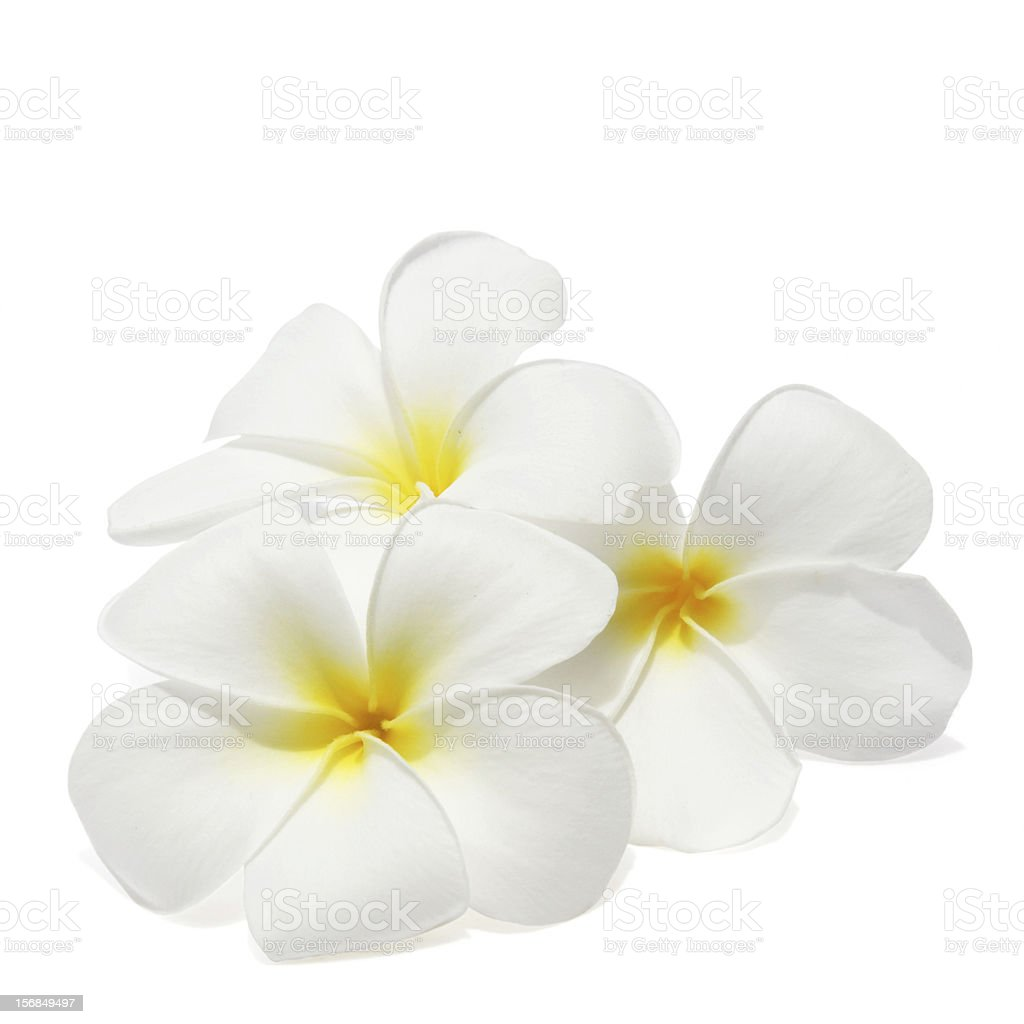 Rose Petals Falling Wallpaper Transparent Gif Royalty Free Tropical Flowers Pictures Images And Stock