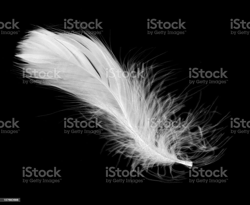 Photos Picture Top 60 Feather Stock Photos Pictures And Images Istock