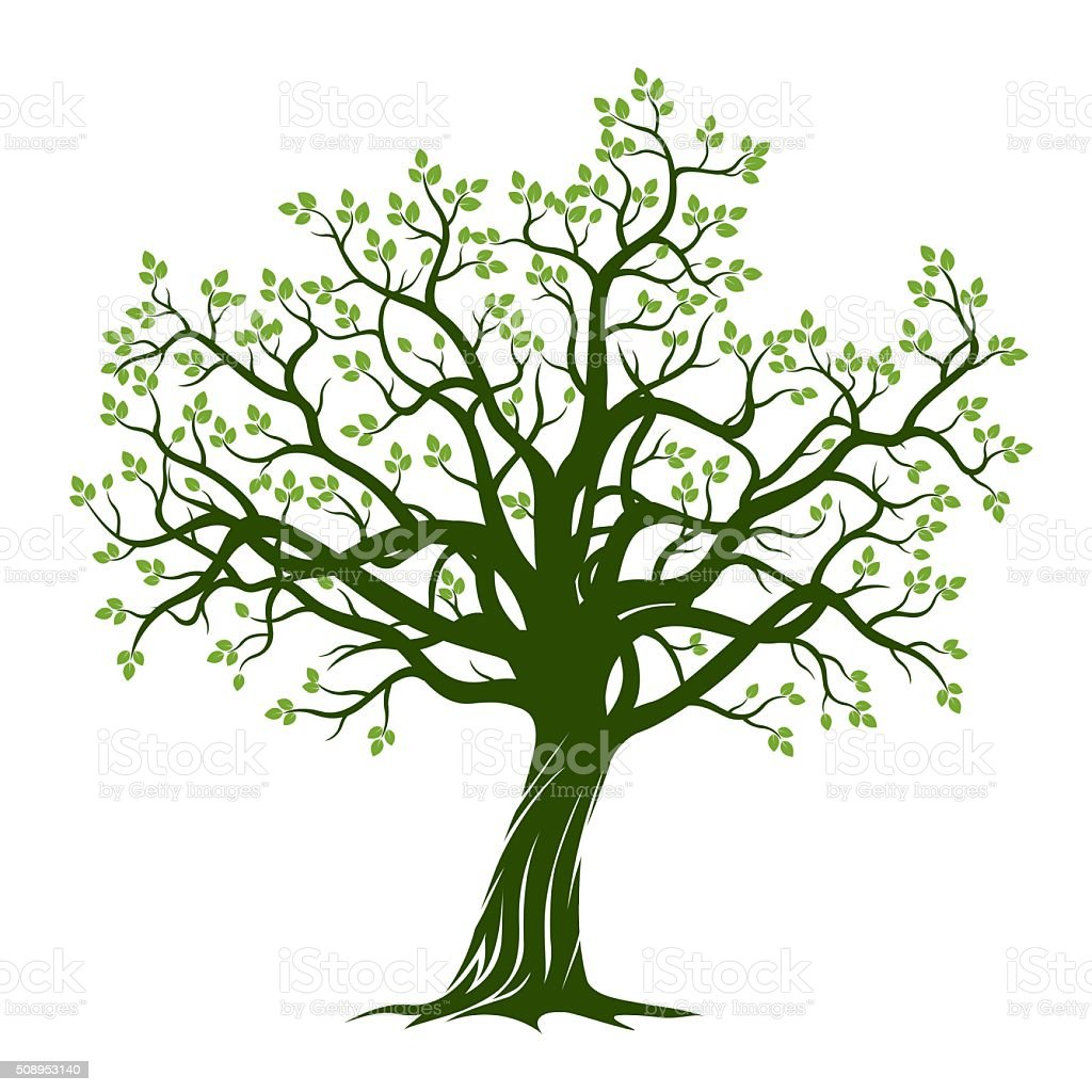 Kirschbaum Wurzeln Green Spring Tree Vector Illustration Stock Illustration