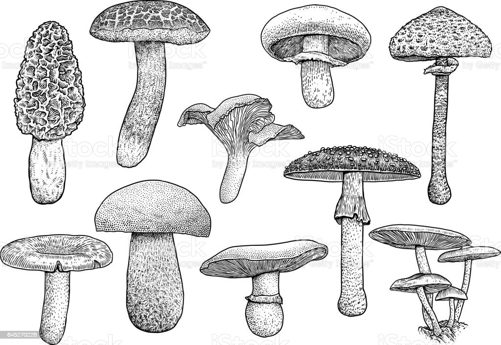 Mushroom Drawings - Auto Electrical Wiring Diagram on