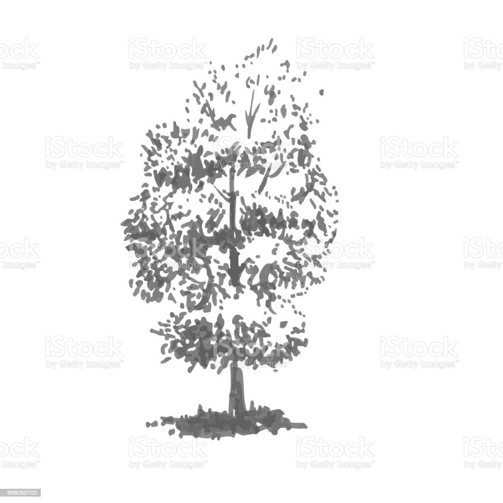 Bild Baum Hand Drawn Tree Linden Realistic Image In Shades Of Gray Sketch