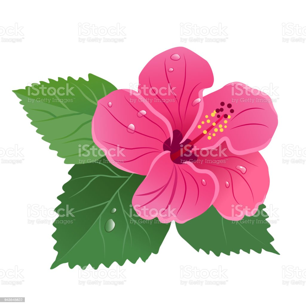 Royalty Free Silhouette of the Hawaiian Flower Border Clip Art