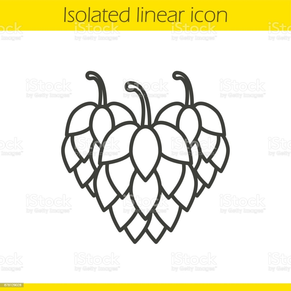 Kiefernzapfen Symbolik Hop Cones Linear Icon Stock Vector Art More Images Of Art Istock