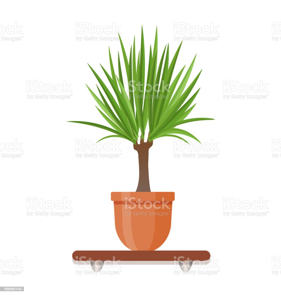 Yucca Plante Interieur Living Room Design Decoration Element Houseplant In A Pot In Flat