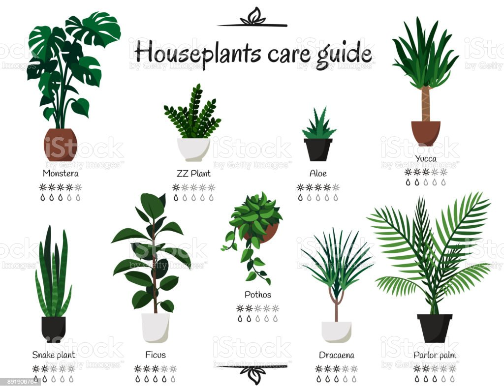 Popular Indoor Tree Plants Popular Common Houseplants Care Guide Vector Isolated