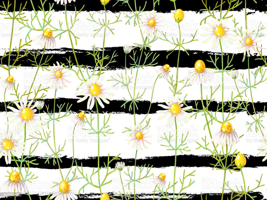 Herbal Wallpaper Seamless Floral Pattern With Chamomile Flowers Summer Background