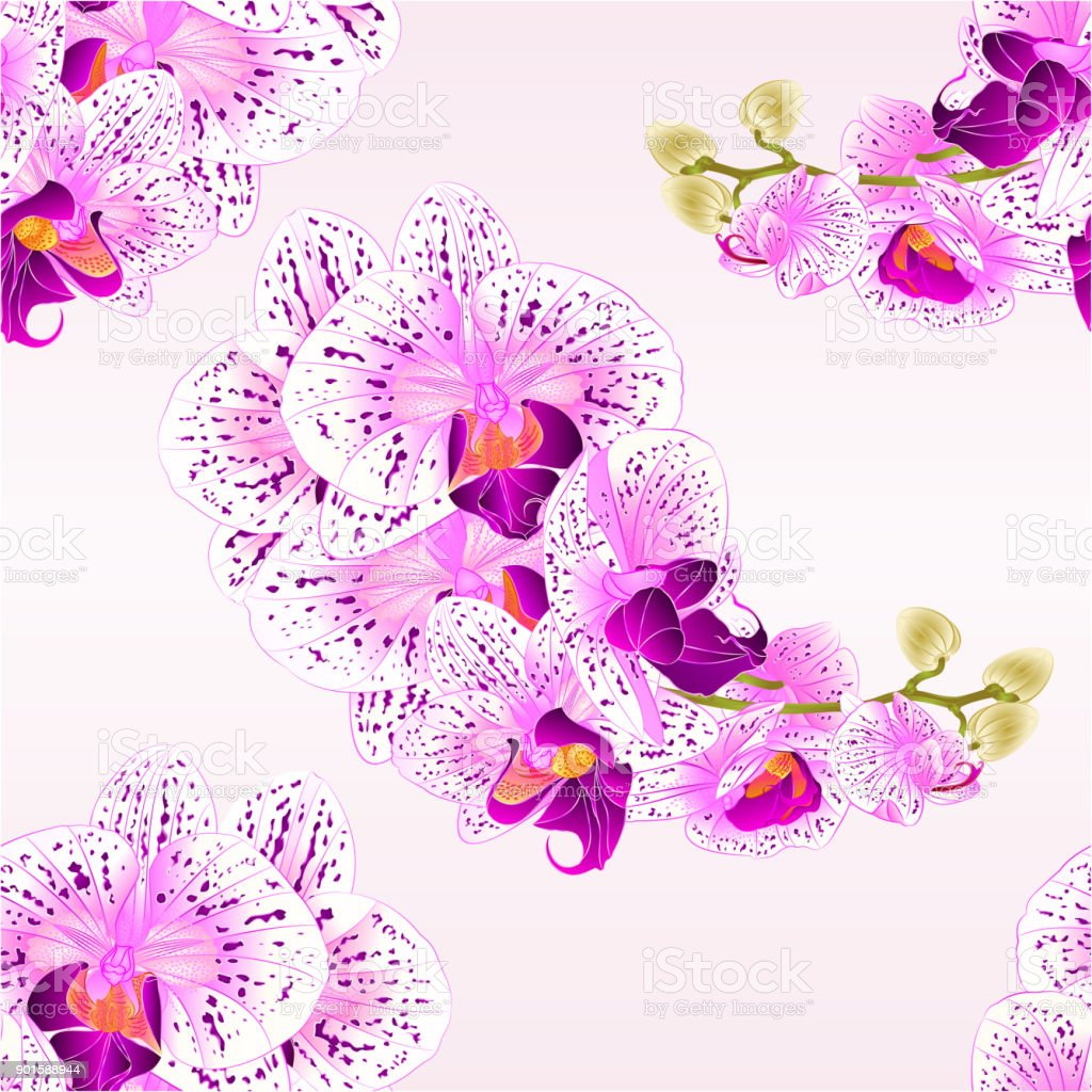 Plant Paarse Bloemen Seamless Texture Stem Orchids Purple And White Flowers Phalaenopsis
