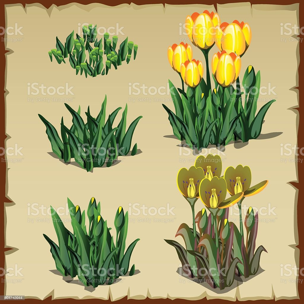 Tulpen Einpflanzen Stages Of Growth Yellow Tulips From Planting To Withering Five Icon