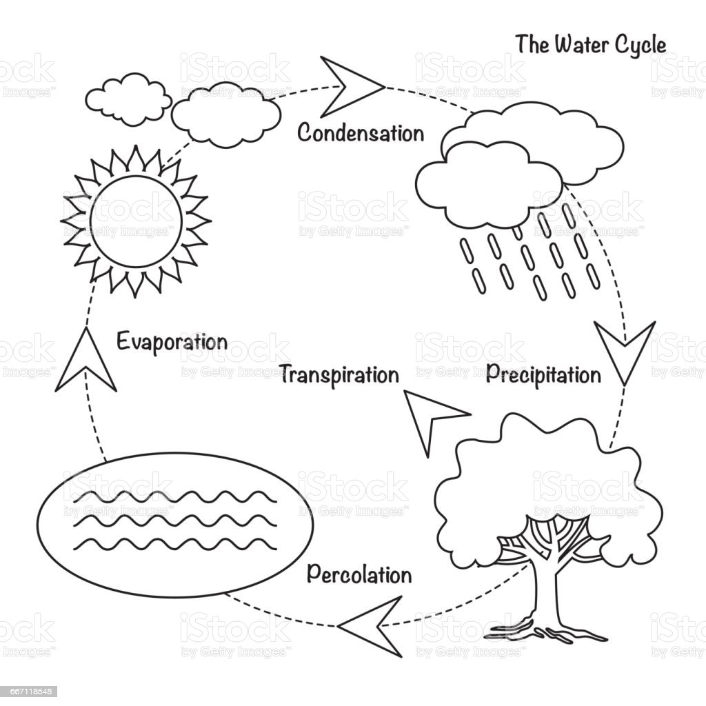 water cycle diagram numbered