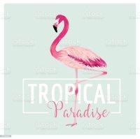 Tropical Bird Flamingo Background Summer Tshirt Design ...
