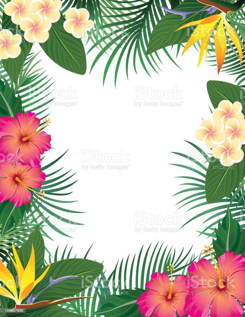 Bridal Wallpaper Hd Tropical Border Stock Vector Art 134807530 Istock