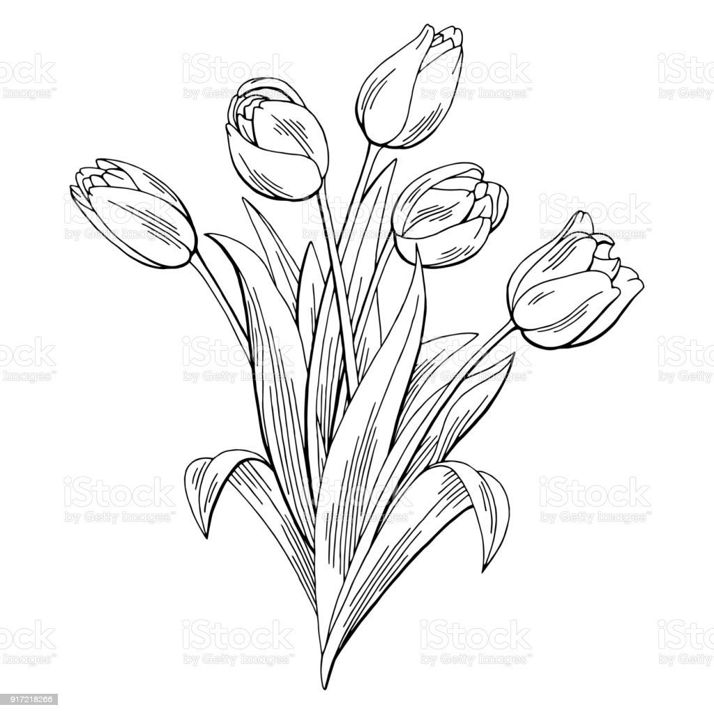 Tulip Flower Graphic Black White Isolated Bouquet Sketch Illustration Vector Stock Illustration Download Image Now Istock