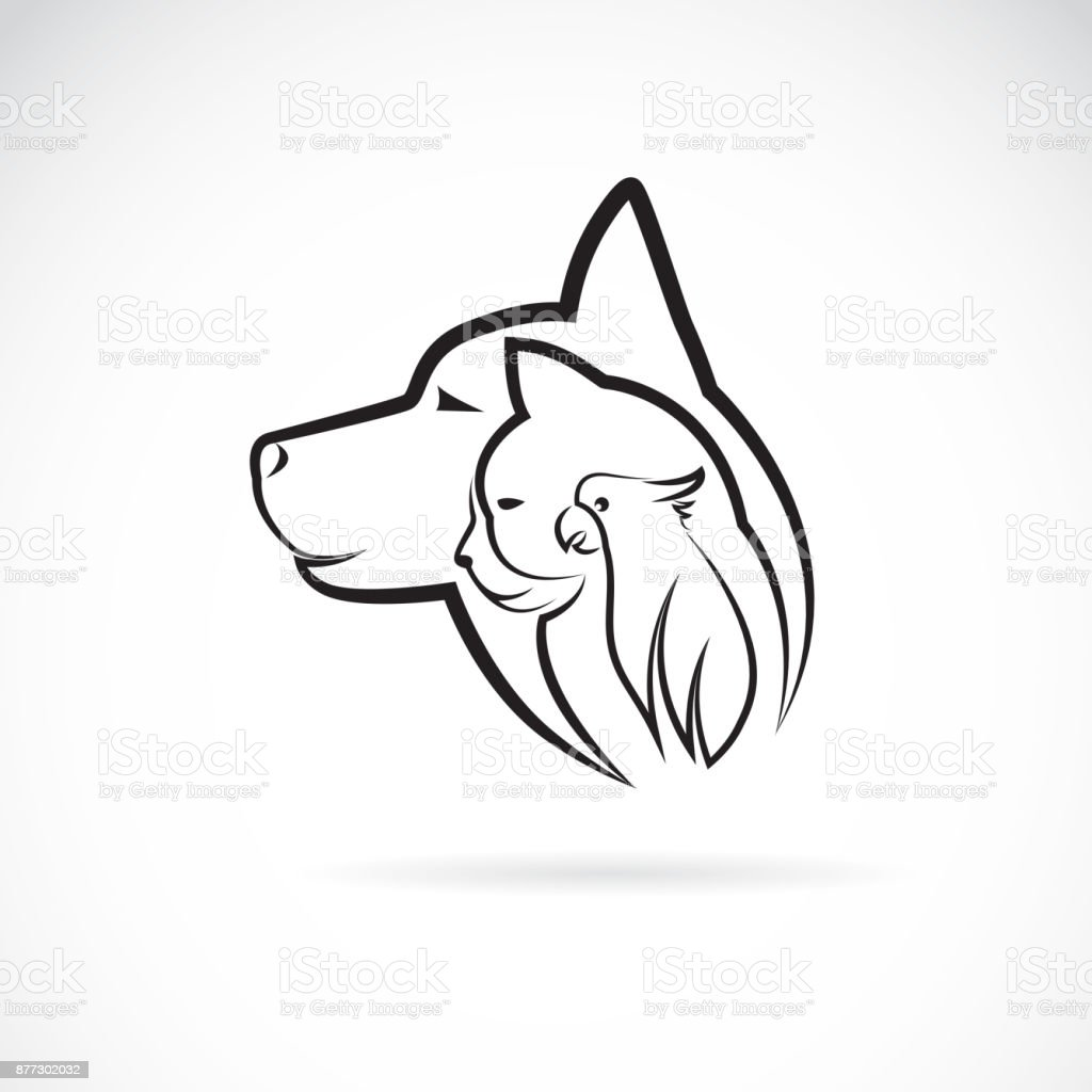 Animal Design Vector Of A Dog Cat And Bird On White Background Pet Animal Design