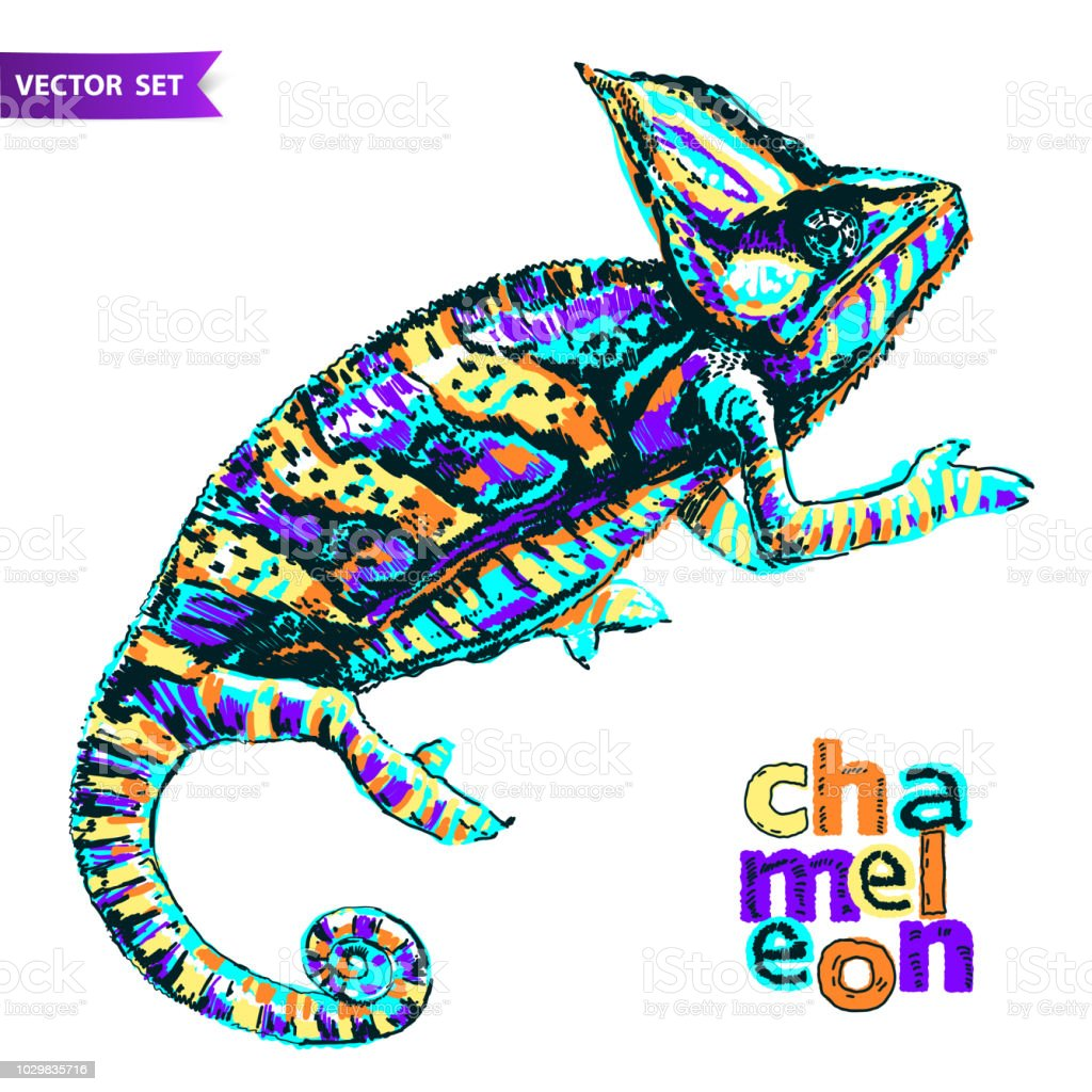Chameleon Style Vector Stylized Multi Coloured Chameleon Hand Drawn Reptile Vector