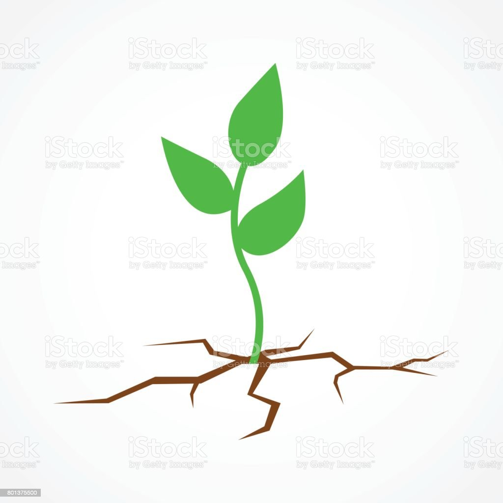 Pflanzen Für Trockenen Boden Graphic Illustration Of A Young Tree Growing On Arid Land Save The