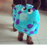Monster Inc Sully Dog T-Shirt Costume, Pet Supplies on ...