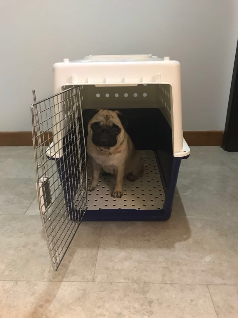 Pet Carrier On Sale Dog Crate Carrier
