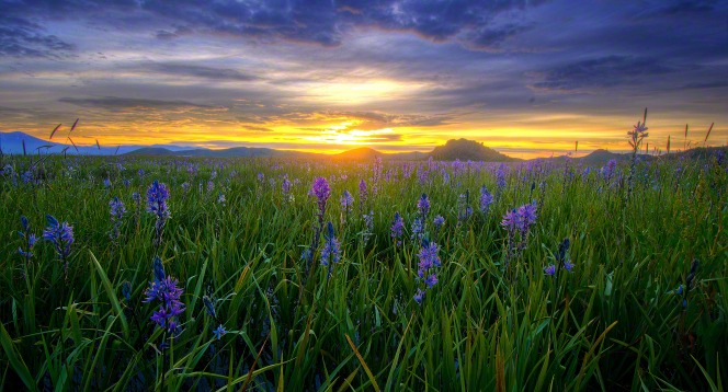 Jesus Christ Wallpapers And Quotes Flower Field
