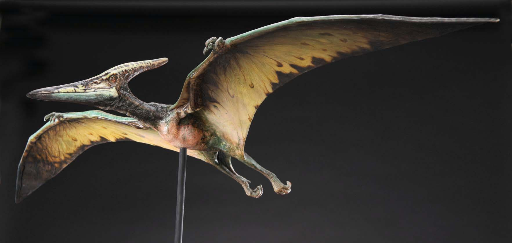 Walking With Dinosaurs 3d Wallpaper Pteranodon Maquette From Jurassic Park Iii