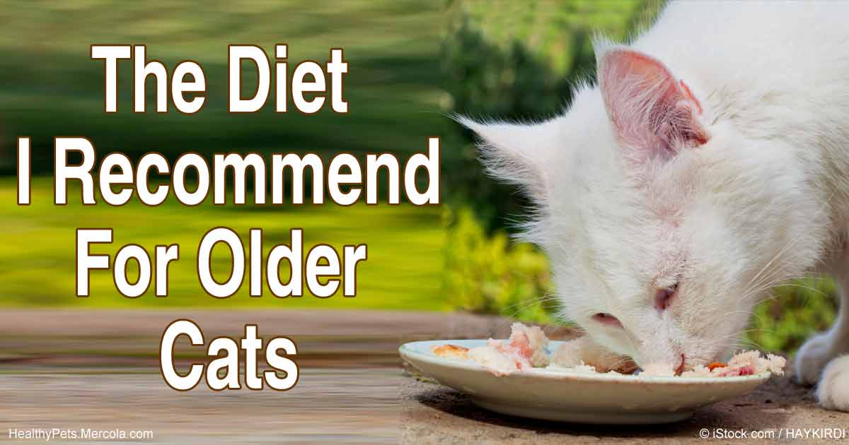 Recommended Diet for Older Cats