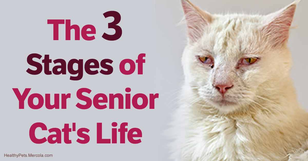 Stages of Your Senior Cat\u0027s Life, and What to Expect of Each