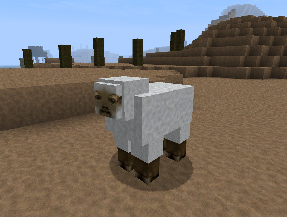 Sheep image