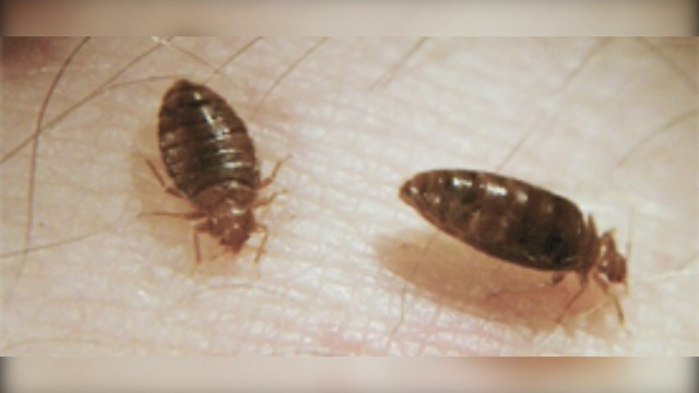 What you should do if you get bed bugs
