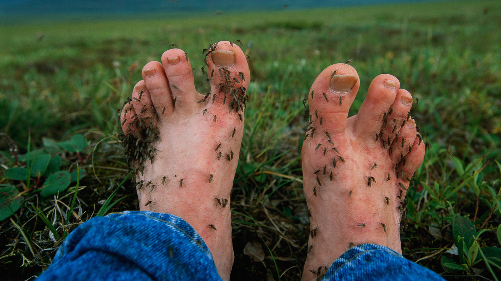 Researchers Have Determined Why Mosquitoes Find Ankles And