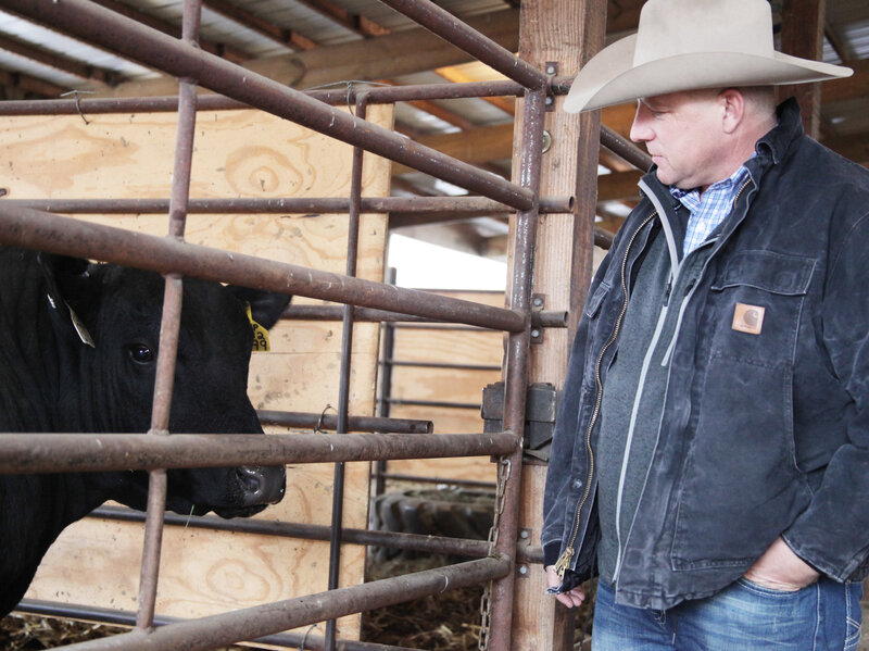 How Prized Bull Semen And DNA Testing Are Reshaping America\u0027s Beef