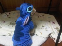 Diy Stitch Dog Costume - DIY Unixcode