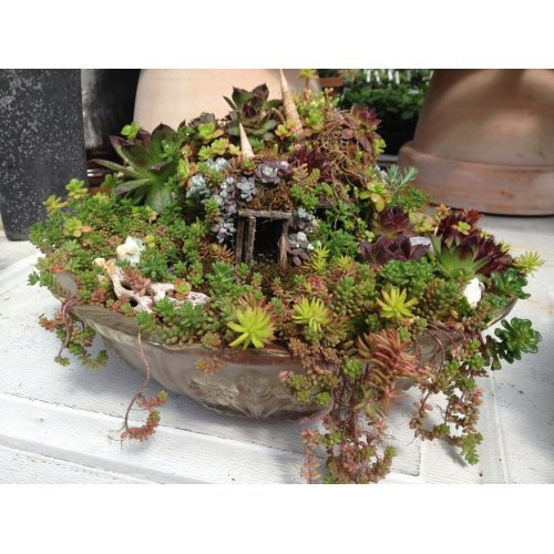 Medium Crop Of Miniature Fairy Garden