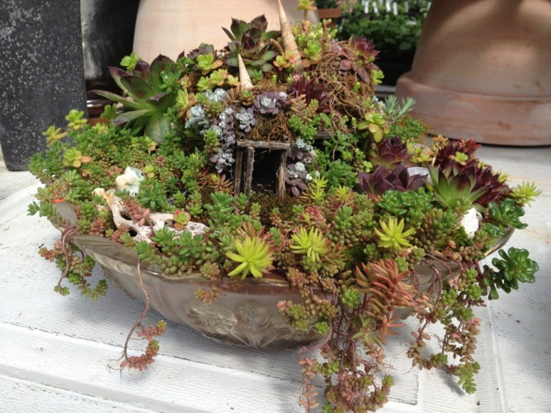 Large Of Miniature Fairy Garden