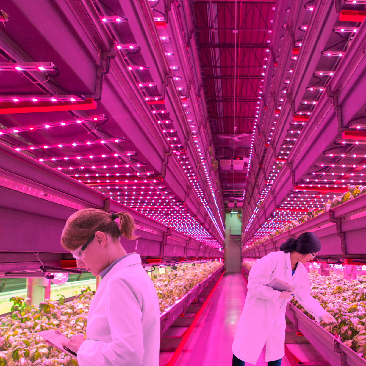 Eclairage Led Agricole Leds For Horticulture Lighting Osram Opto Semiconductors