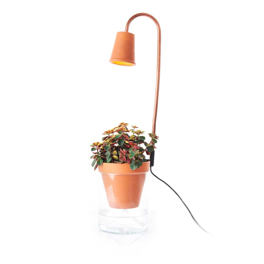 Plante D'interieur Orange Cotta Calla Garden