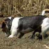 Min lerparson Doggy