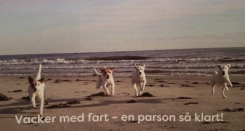 parsontp