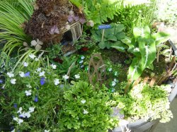 Small Of Pics Of Fairy Gardens
