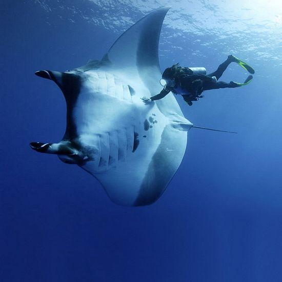 765 best MARINE BIOLOGY images on Pinterest Under the sea, Water - marine biologist job description