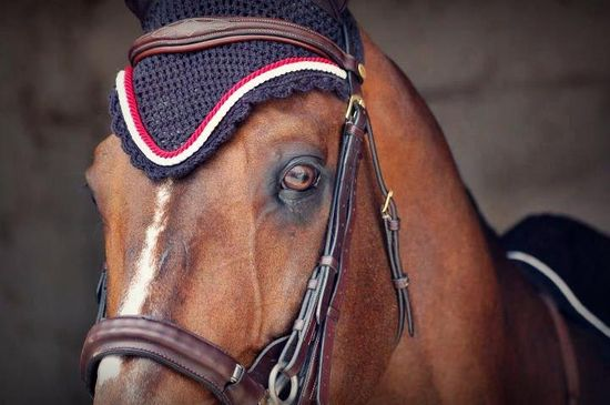 356 best Equine images on Pinterest Equine photography, Horses - equine release form
