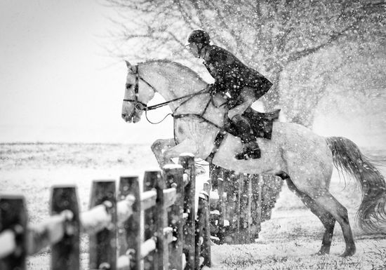 1054 best To The Dedicated Riders images on Pinterest Horses - equine release form