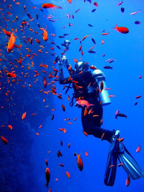 157 best Scuba images on Pinterest Travel, Armour and Buyers guide - marine biologist job description