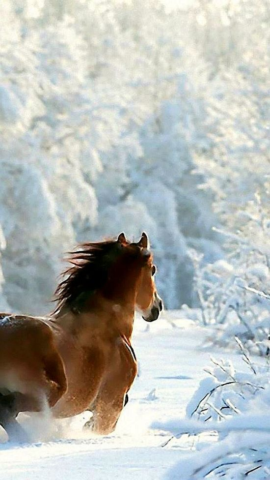 453 best Photography Horses and ponies images on Pinterest - equine release form