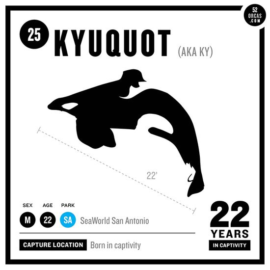 9 best Captive Orca Kyuquot images on Pinterest Killer whales - easy profit and loss form