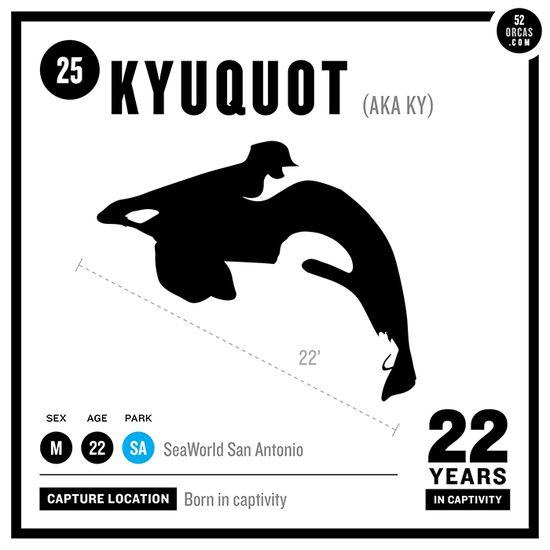 9 best Captive Orca Kyuquot images on Pinterest Killer whales - incident action plan