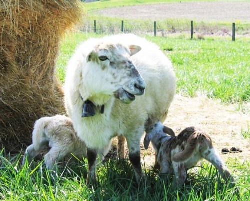 108 best my memoir of farming images on Pinterest Memoirs - farmer resume
