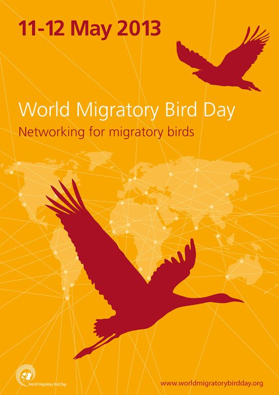 39 best Birds Migrations images on Pinterest Bird migration - accounting cover letters