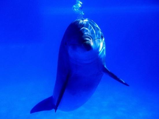 553 best Dolphins images on Pinterest Nature, Beautiful and - marine biologist job description