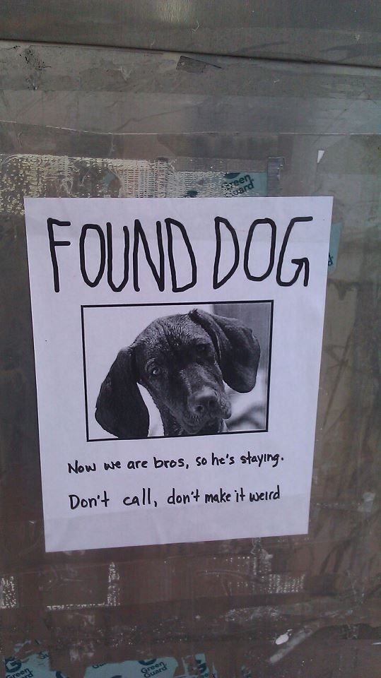 126 Best Lost N Found Images On Pinterest Find Pets, Adoption   Lost Pet  Flyer  Lost Pet Flyer Maker